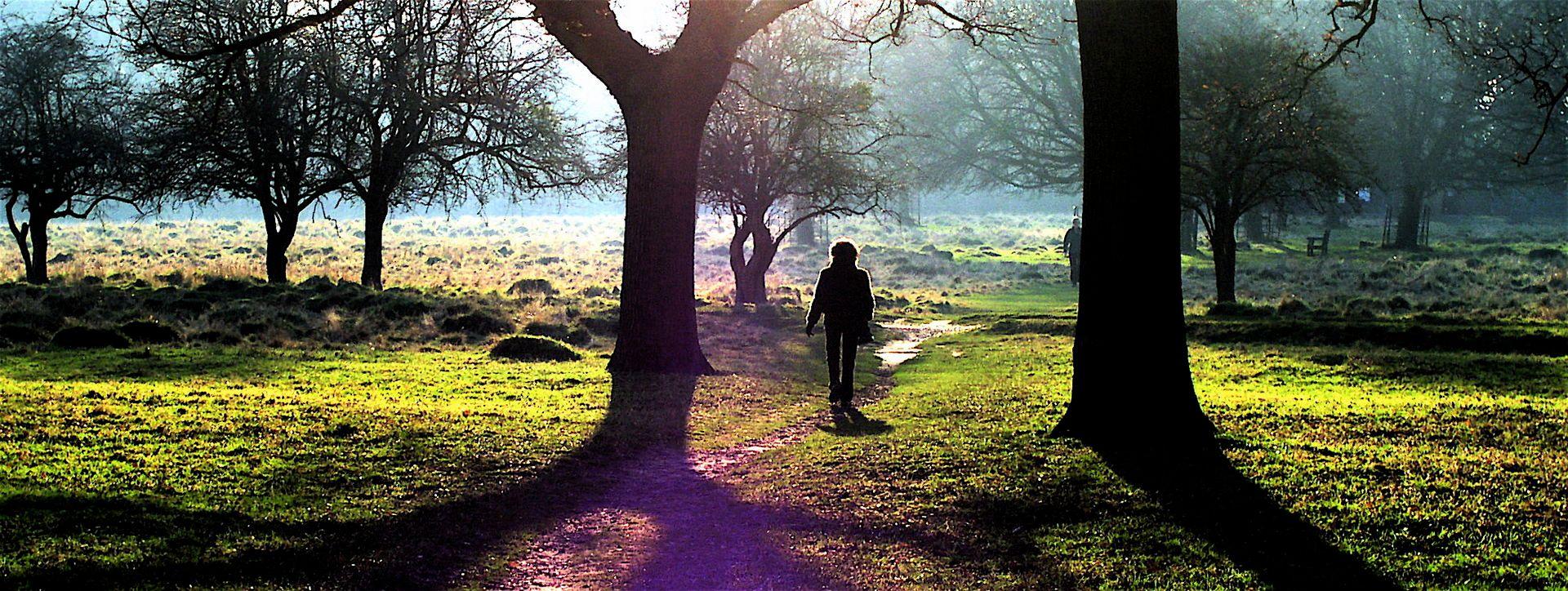 Midwinter_sunshine_in_Bushy_Park,_Teddington_P2120008